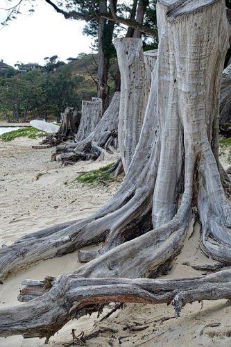 Tree Trunk Root Canal Twentysomething Vision