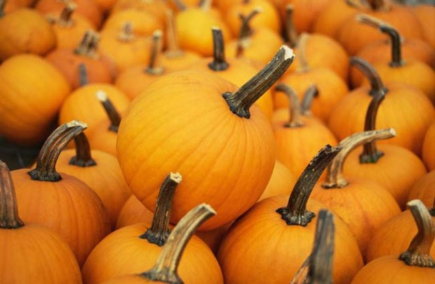 20091022__091029e-puck-pumpkin.jpg