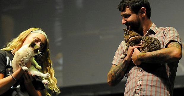 The first ever meeting of Grumpy Cat, left, and Lil Bub was on stage at the 2013 Internet Cat Video Festival presented by Walker Art Center at the Minnesota State Fair Grandstand, Wednesday, August 28, 2013 in Falcon Heights. (Pioneer Press: John Autey)