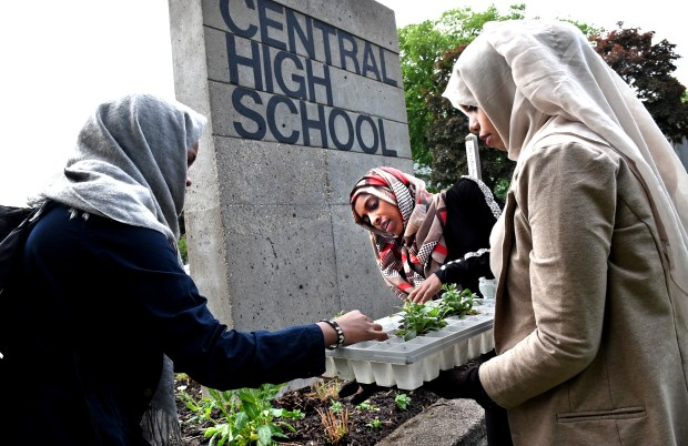"Environmental science students from left, Maryan Yusuf, Lemlem Jeldo and Khadija Bobe plant petunias at Central High School in St. Paul for the Transforming Central Project on Friday, May 20, 2016. ""I think it's great,"" said Bobe. ""Central looked more prisonlike before -- now it's more vibrant."" (Pioneer Press: Jean Pieri)"