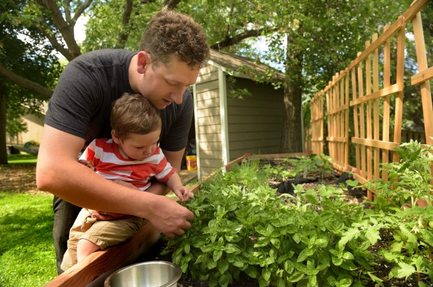 Louie holds Burke as they pick basil from their garden. (Pioneer Press: Scott Takushi)