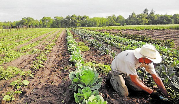 Boerson Farm in Green Lake County in Wisconsin is run by Matt and Danielle Boerson and welcomes visitors. (Boerson Farm)