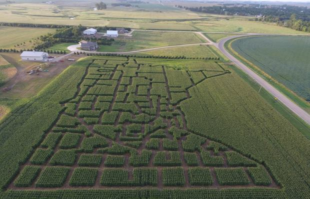 An aerial view of the corn maze on the Spronk farm in rural Edgerton, in southwestern Minnesota. (Forum News Service submitted photo)