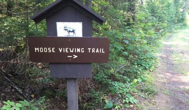 Moose Viewing Trail along the Gunflint Trail near Grand Marais, Minn. (Pioneer Press: Amy Carlson Gustafson)