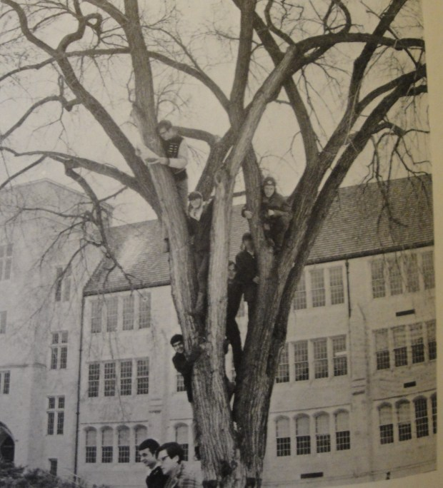 "The little treasures ... JOHN IN HIGHLAND writes: ""As sad as it is to see our majestic elm trees dying, the survivors are beautiful. There are two huge examples that remain in the quadrangle at Macalester College. All of the elms are gone from the courtyard at St. Thomas College. Only one remains on the south side of old Albertus Magnus (now Roach) Hall. Gone are the days when the 'tree huggers' from the Aquin staff could climb the elms that graced the campus. FYI: That's our favorite tree hugger, Joe Soucheray, farthest to the right in the photo."""