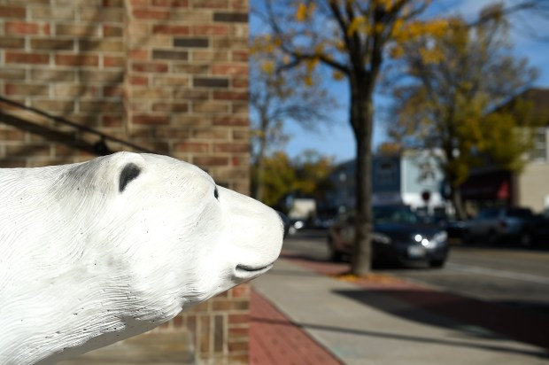 A white bear along Fourth Street in White Bear Lake on Monday, October 10, 2016. (Special to the Pioneer Press: Craig Lassig)