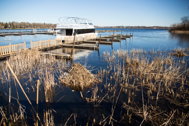 LJD_Low_Water-2Along with the low water levels, muskrat huts have been popping up on the shorelines of White Bear Lake. Pictured here, a muskrat hut sits prominently in front of Brian McGoldrick's business, Admiral D's, on Monday, Nov. 21, 2016. (Pioneer Press: Liam James Doyle)