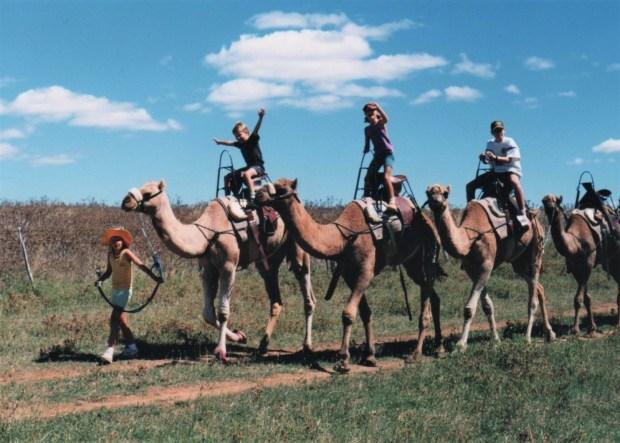 170416bbcut-camels