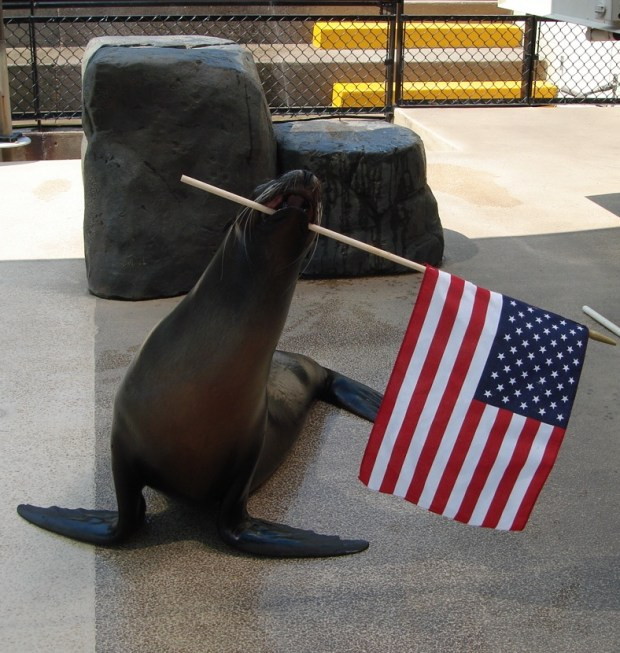 The Sparky the Sea Lion show is back for its 61st year at St. Paul's Como Zoo. (Courtesy Como Zoo and Conservatory)