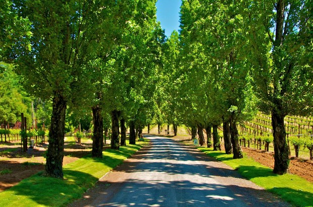 Sonoma County winery