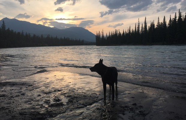 Rollo of Sacramento, Calif., enjoys Jasper's dog-friendliness and the sunsets near his Wabasso campground home base. (Courtesy of Susan Maas)