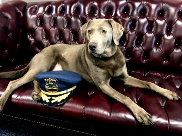 St. Paul Police Chief Todd Axtell has been bringing his dog, Stella, to work sporadically on Fridays. He noticed the dog lightened the mood in the office with employees, and she was part of the inspiration for the police department to get a comfort dog. (Courtesy of the St. Paul Police Department)