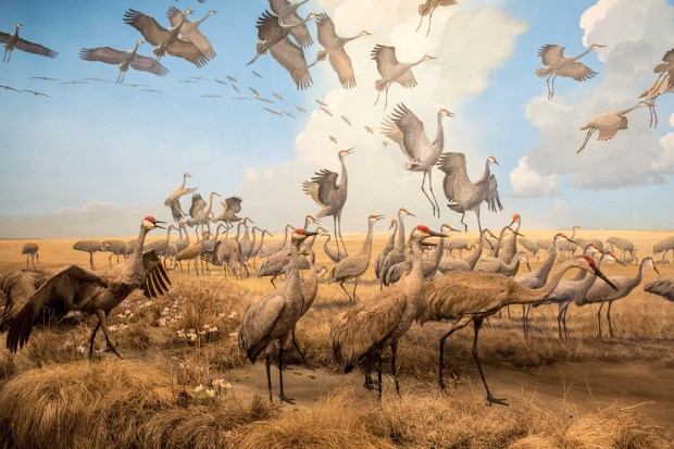The Bell Museum's dioramas: zeroing in on Minnesota's biomes