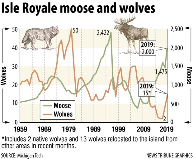 On Isle Royale, high moose population is damaging forest