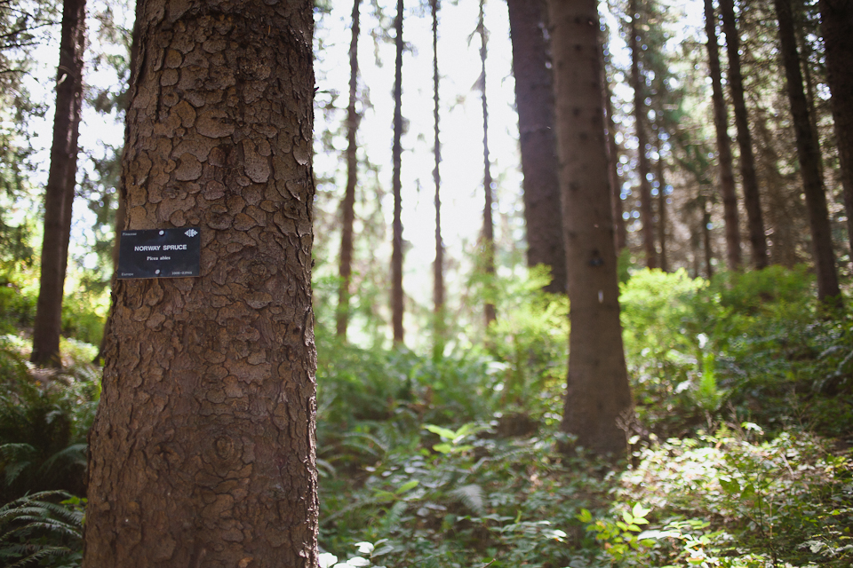 Ashley-Ian-Hoyt-Arboretum-Forest-Wedding-Portland-BethOlsonCreative-037