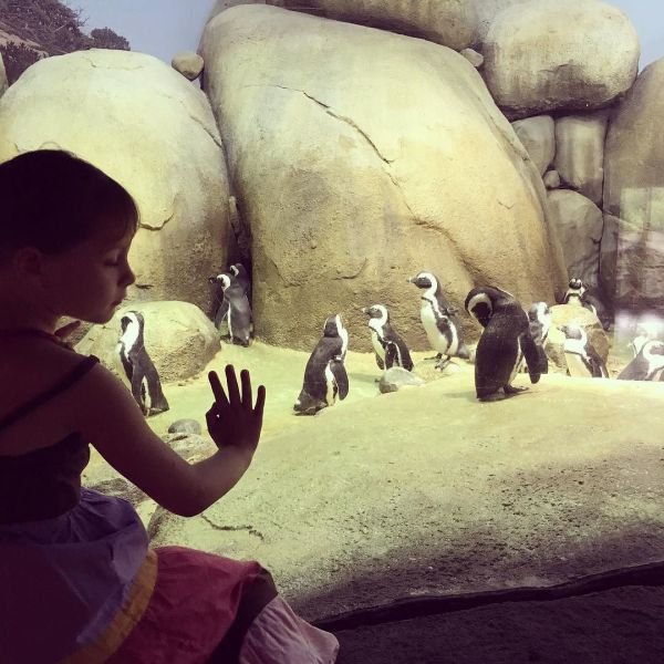 Lily & Penguins