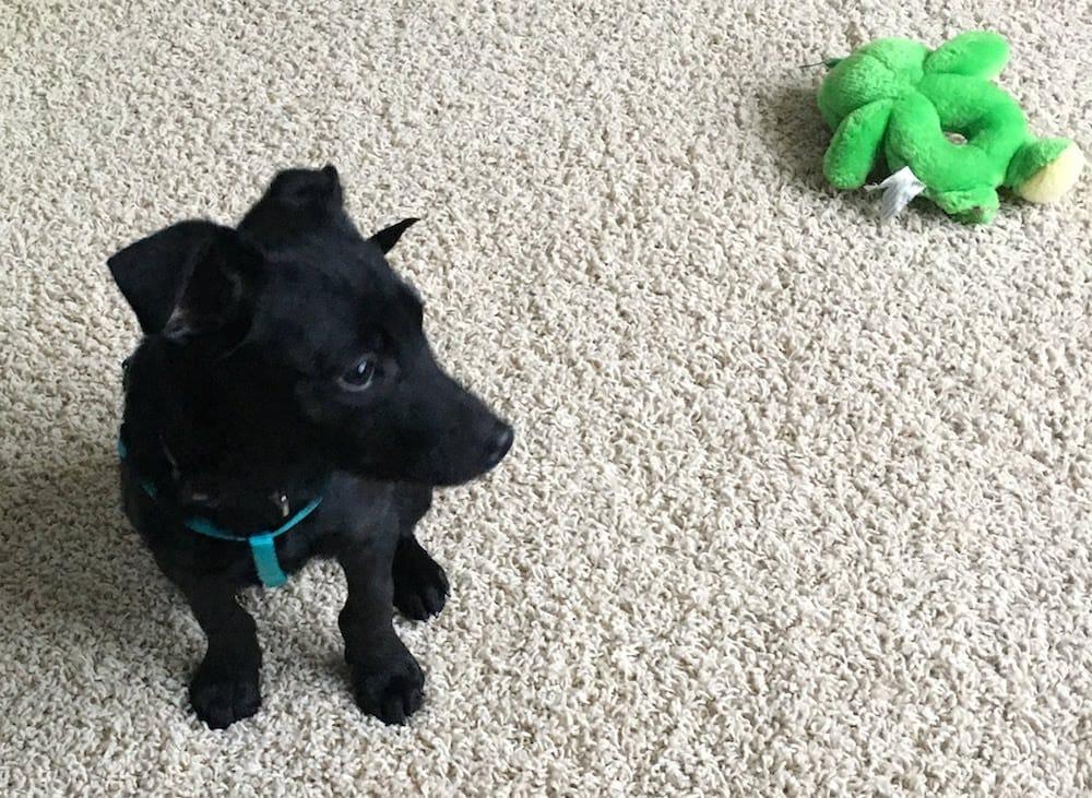 Zero next to his favorite toy.