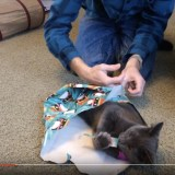 Trying to wrap a cat.