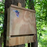 Front view of the bat house.