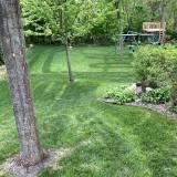 Dark green lines on lawn