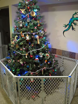 Protecting the Christmas tree