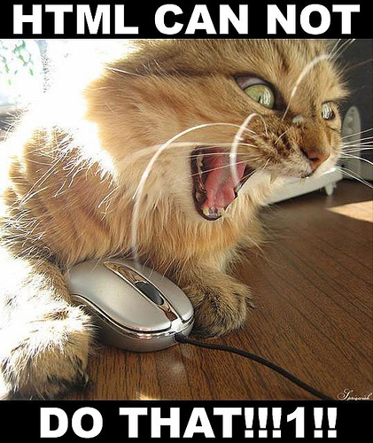 Cat Angry At The Internet