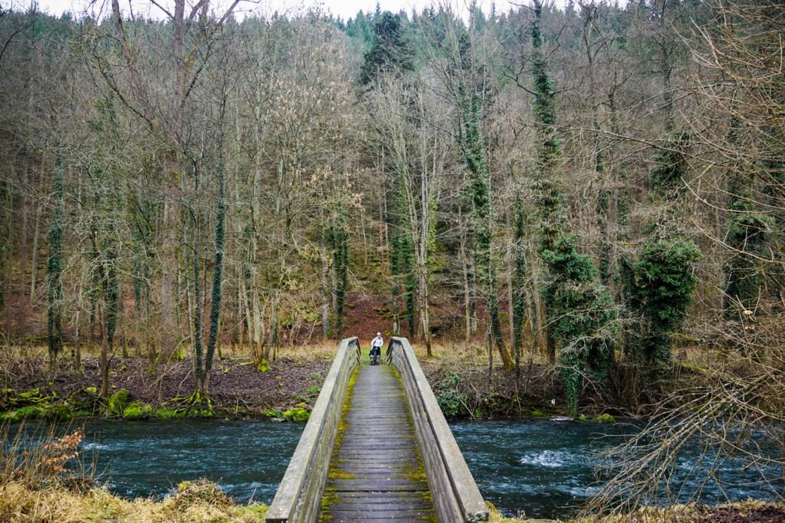 Forest Tubingen