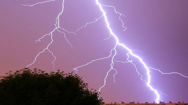 5 cattle died due to lightning strikes