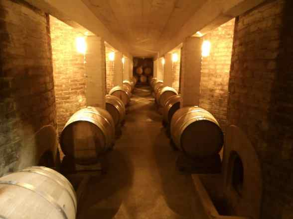 Guided vineyard tour