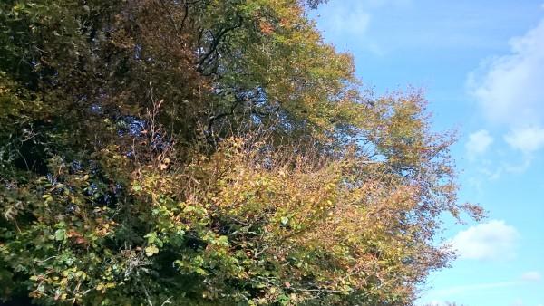 green-brown-leaves