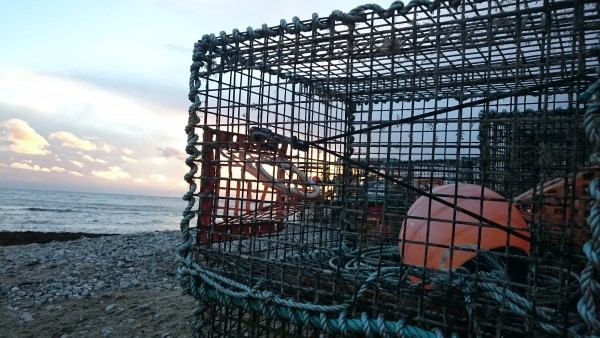 lobster-pot-lyme-regis