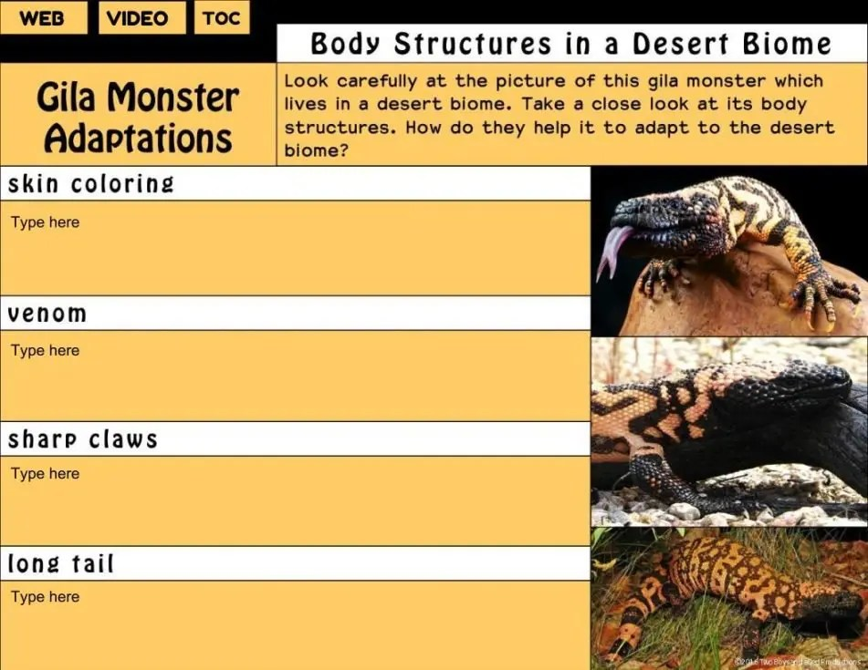 Desert Animals Adaptations Interactive Digital Notebook
