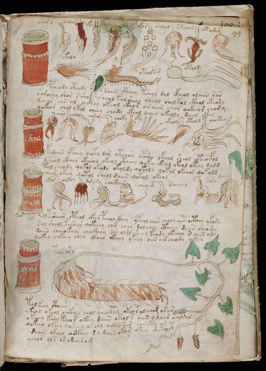 800px-Voynich_Manuscript_(175)