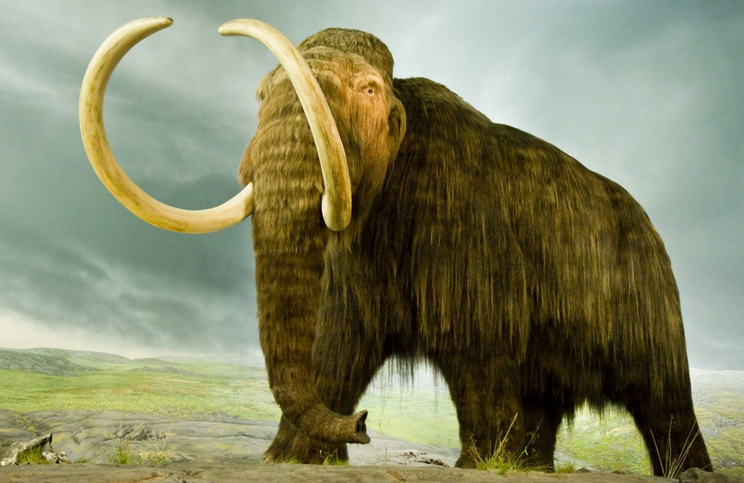 woolly-mammoth-standing.jpg