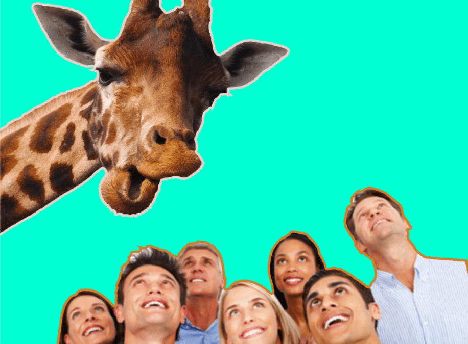 A Giraffe Giving Birth Keeps Popping Up On My Timeline Because Americans Are Weird As Fuck
