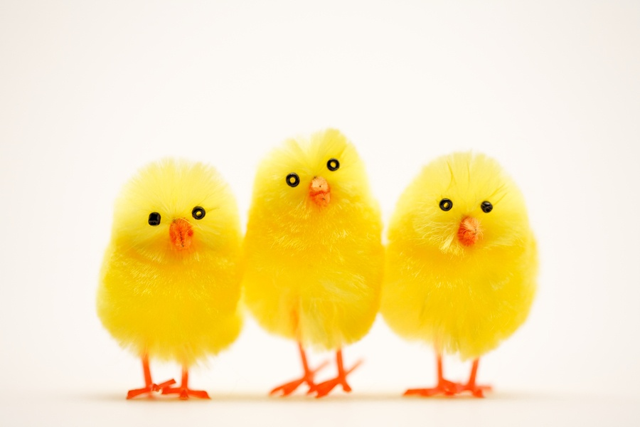 Easter_Chick_12