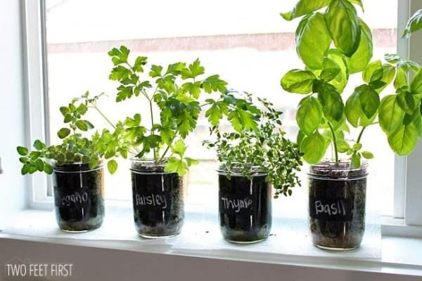 indoor herb garden Indoor Herb Garden