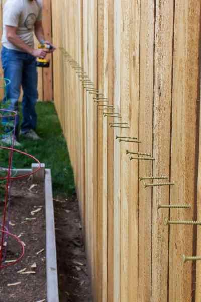 screwing cedar pickets into place