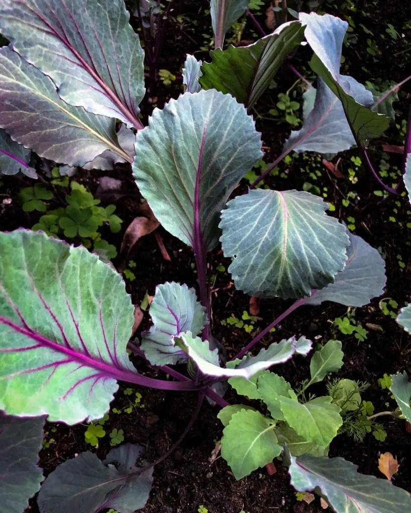 Grownig plants