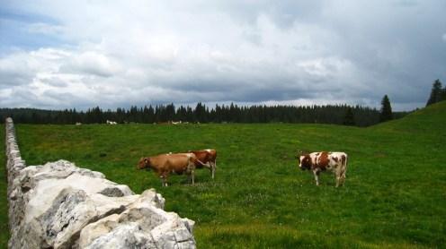 Sèche des Amburnex - Le Chenit - Vaud - Suisse