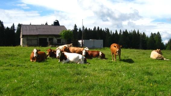 Les Petits Plats - Vaud - Suisse