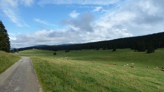 Grands Plats de Bise - Vaud - Suisse