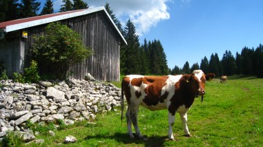 Citerne près de Lande Dessus - Vaud - Suisse