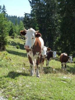 Monts de Bière Derrière - Vaud - Suisse