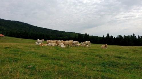 Le Bugnonet - Vaud - Suisse