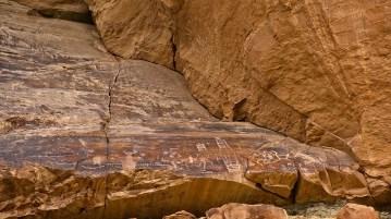 Pregnant Buffalo - Nine Mile Canyon - Utah