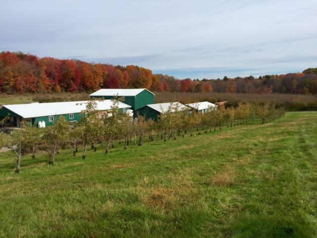 The fall foliage and scenery at the orchard was amazing.