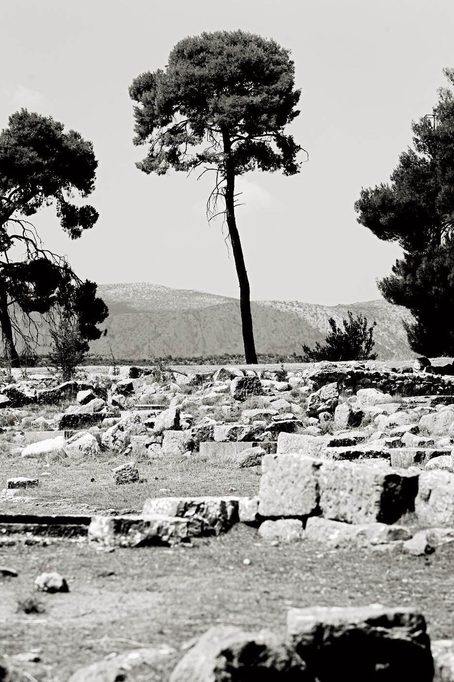 Un árbol, cerca del teatro de Epidauro