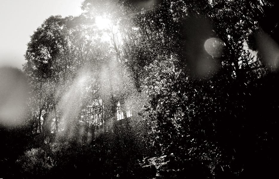 Madrid, jardín botánico. Agua sobre las hojas y el fotógrafo.