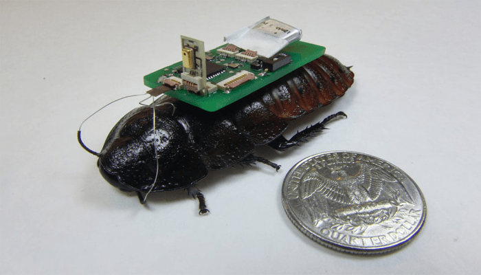 UAVs and insect cyborgs collaborate to map disaster zones